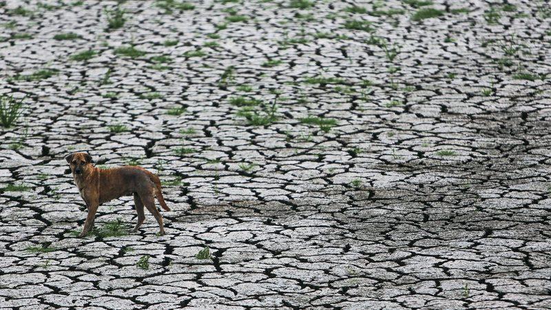 Centrais paradas, regas limitadas. Como o país combate a seca