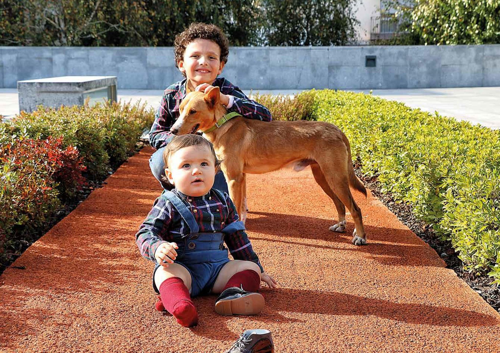 Fotos. Cães à procura de dono posam para calendário solidário