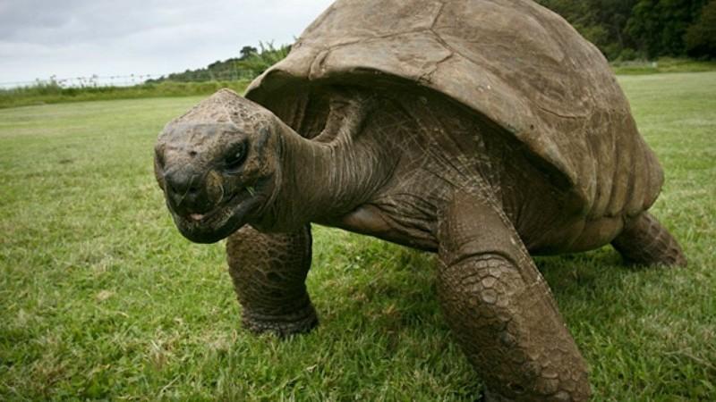 Porque é que alguns animais vivem tantos anos?