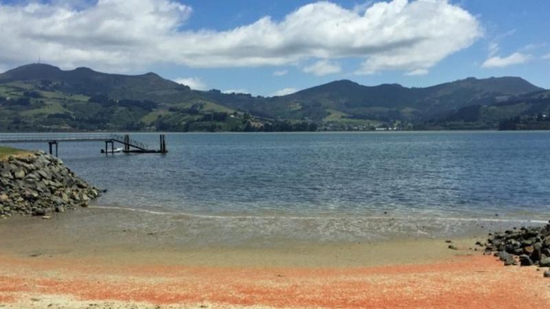 """""""Maré"""" de lagostas deixa areal das praias do sul da Nova Zelândia vermelho"""