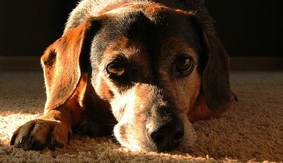 O que precisa saber sobre o luto quando perde o melhor amigo de quatro patas