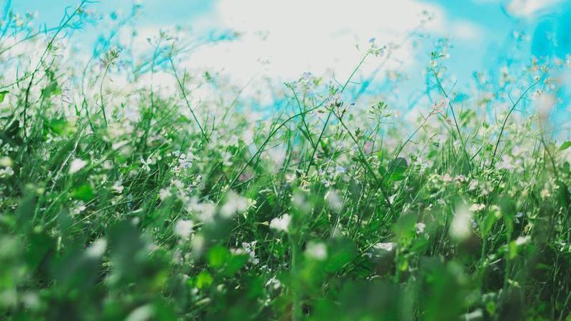 Alergias no novo normal: participe e resolva as suas dúvidas