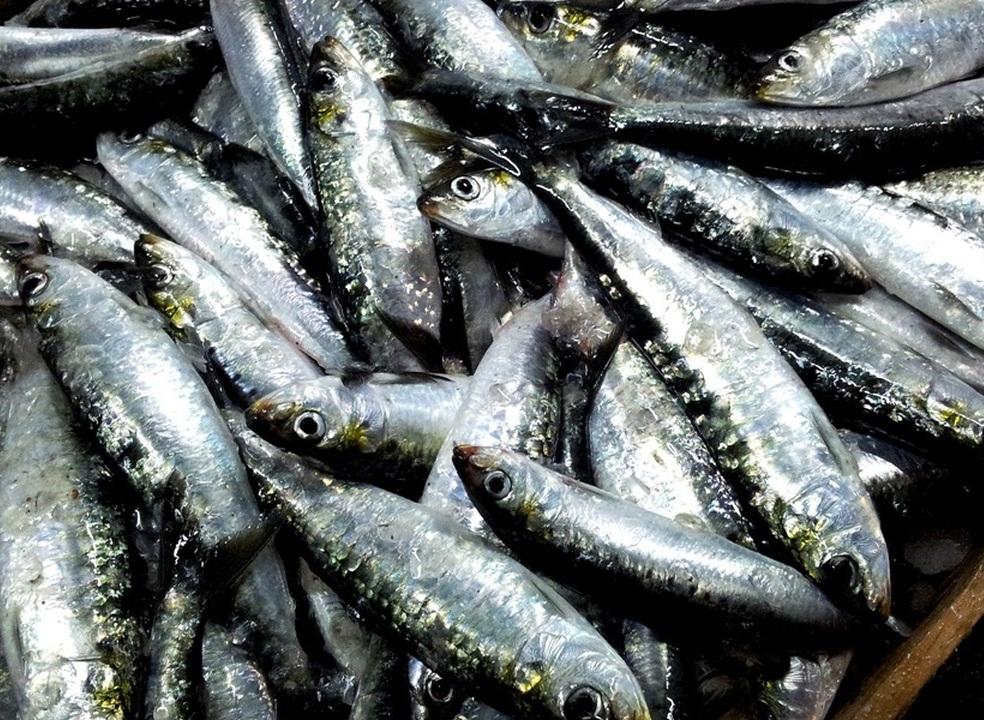 """""""Só pode ser brincadeira de mau gosto"""". Pescadores incrédulos com declarações de diretor-geral da Comissão Europeia"""