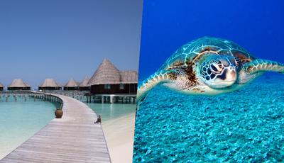 Maldivas: este hotel está à procura de estagiário para tomar conta de tartarugas resgatadas