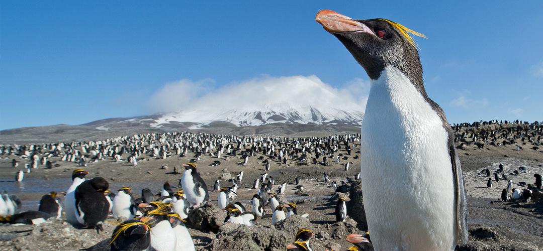 Sítios onde (ainda) se podem ver pinguins no seu habitat natural