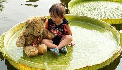Neste parque, pode sentar-se em nenúfares gigantes. E é lindo