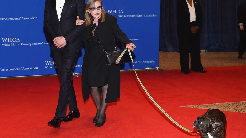 Filha e secretária de Carrie Fisher disputam a 'guarda' do cão da atriz