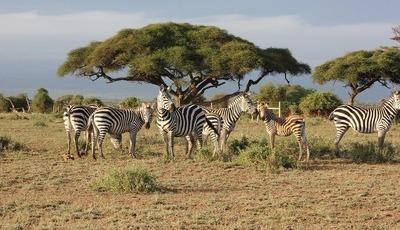 Sempre quis fazer um safari mas acha que não tem dinheiro para isso? Então estas dicas são para si