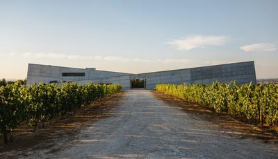 Caminhos Cruzados e a história de uma adega que nasceu num berço de vinhas
