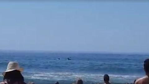 Golfinhos surpreendem banhistas a Norte