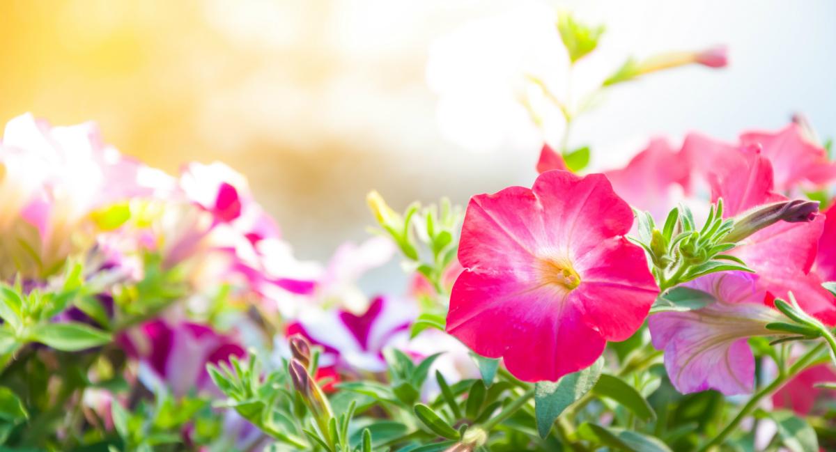 Flores para os meses de maior calor