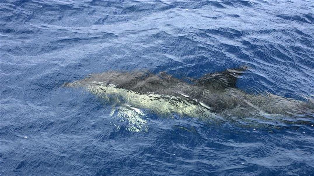 Golfinhos e gaivotas encontrados mortos no Sado