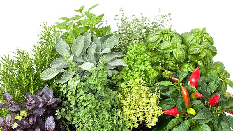 7 plantas medicinais que pode (facilmente) cultivar em casa