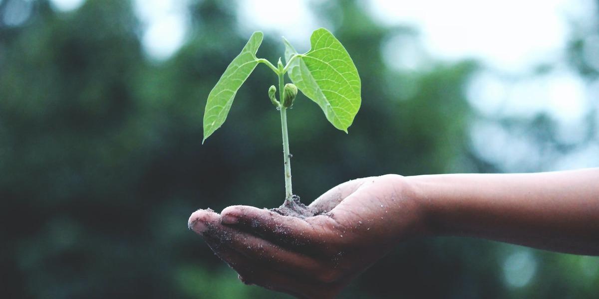 Este ano vamos esgotar os recursos naturais da Terra mais tarde. A COVID-19 deu uma ajuda na conservação do planeta