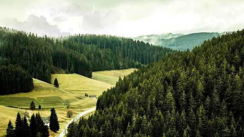 """Estas são as florestas mais """"instagramáveis"""" do mundo"""