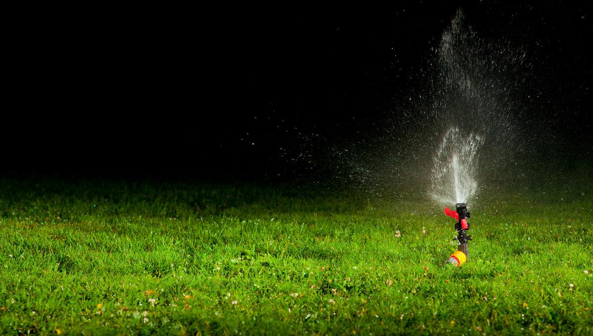 12 conselhos para poupar no jardim