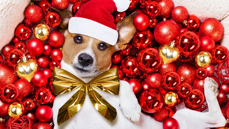 Cães, gatos e árvores de Natal, uma combinação que garante boas gargalhadas