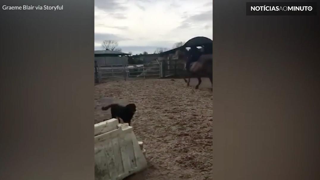 Cavalo desajeitado tenta saltar cerca, mas cai de focinho