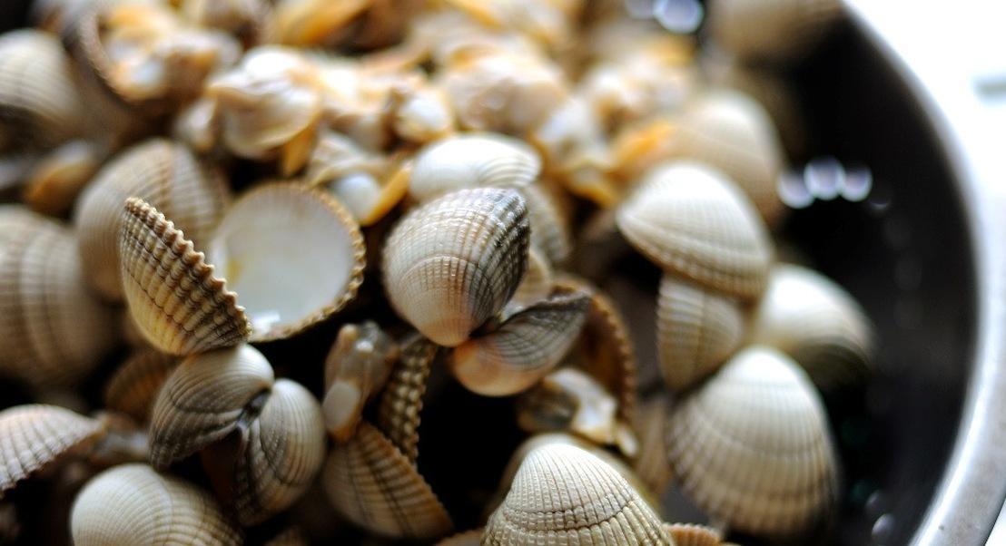 No Algarve já se preparam as mesas para o Festival do Berbigão