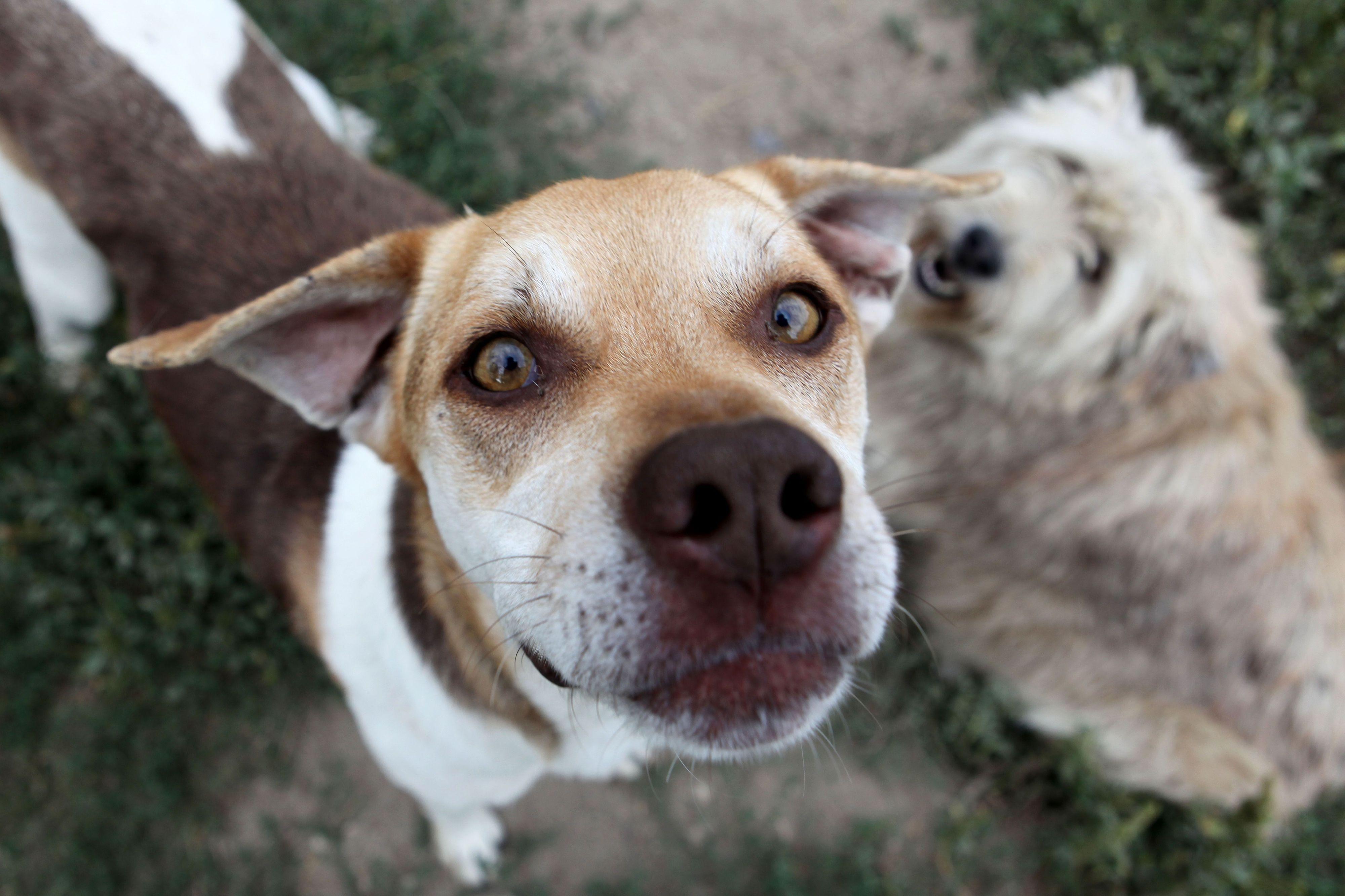 Bastonário dos Veterinários: Lei que criminaliza maus tratos a animais contribuiu para abandono