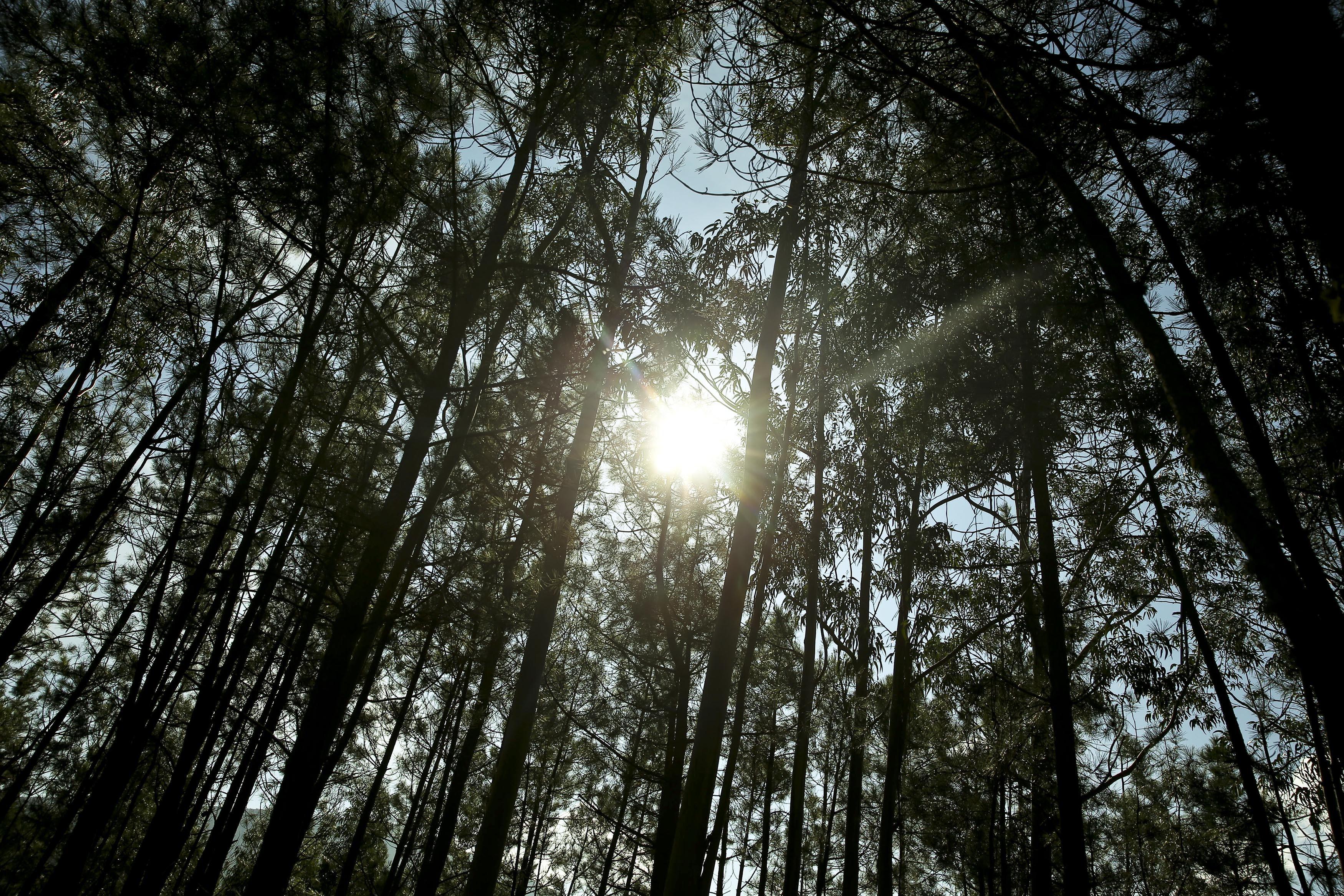 Reforma florestal avança com travão à expansão de eucalipto e sem banco de terras