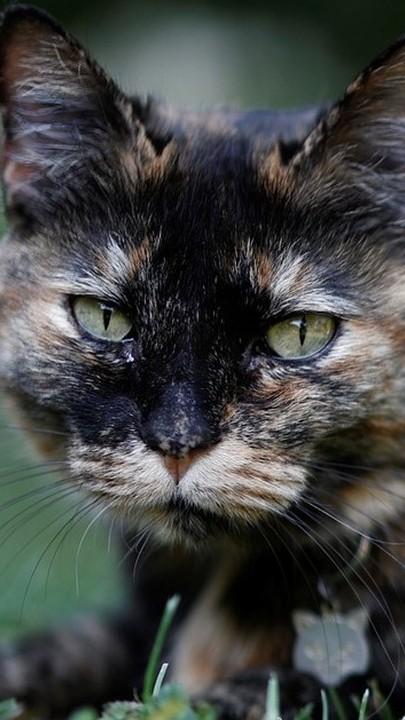 Papille, a gata francesa que recuperou da COVID-19