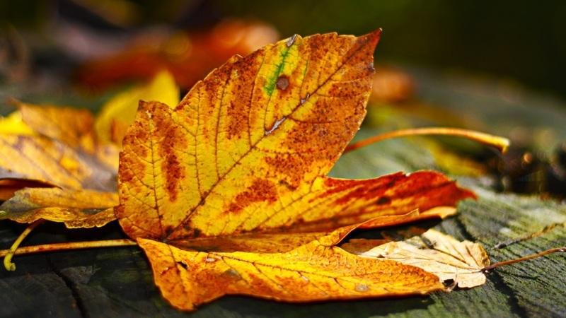 Os melhores lugares para apreciar as cores do outono
