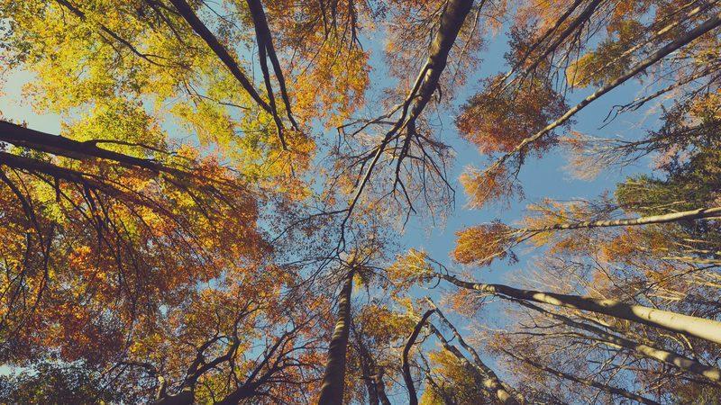 Fileira florestal representa 1,2% do PIB e 10% das exportações de bens do país