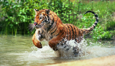 O maravilhoso mundo animal no MEO Kanal