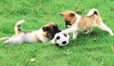 The Pet Collective: Surpreenda-se  com os animais mais engraçados e fofos