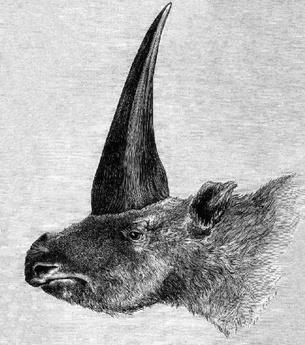 Elasmotherium sibiricum, ilustração de Rashevsky, 1878