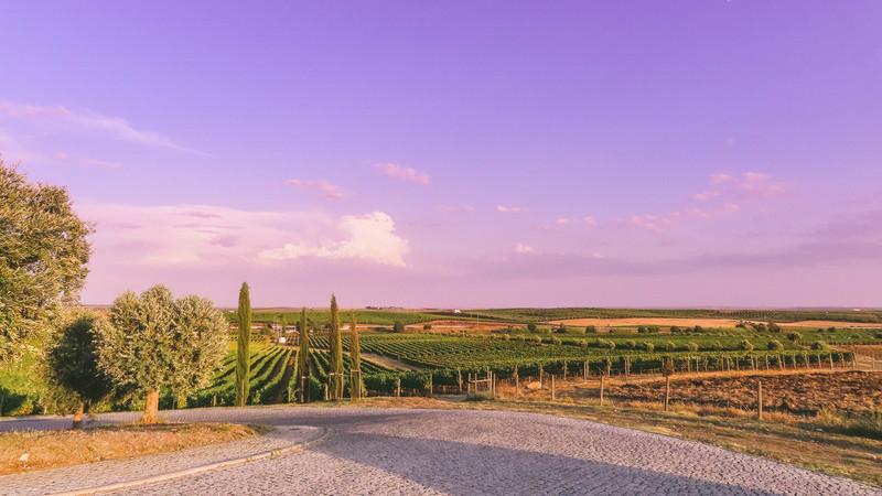 Um dia para saborear o Alentejo com vinhos vegan e descobrir os segredos do maior lago artificial da Europa