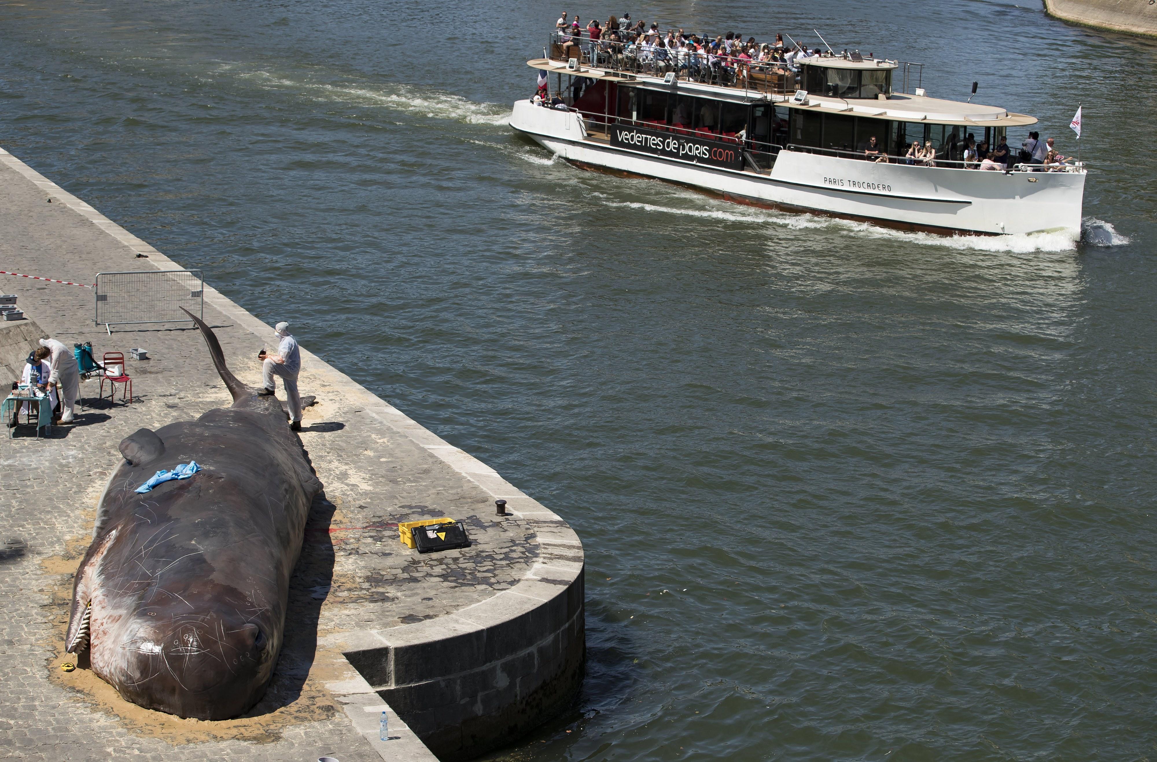 Uma baleia deu à costa em Paris