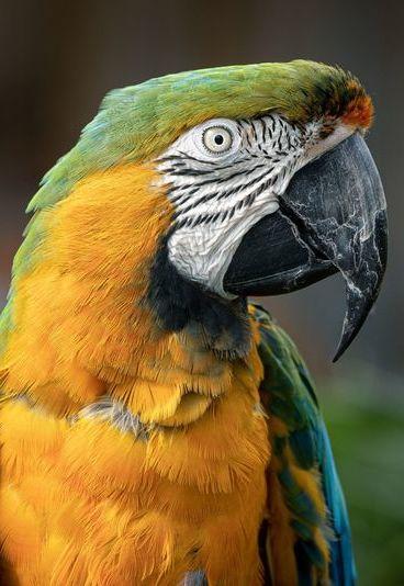 Quiz: teste os seus conhecimentos sobre a vida animal
