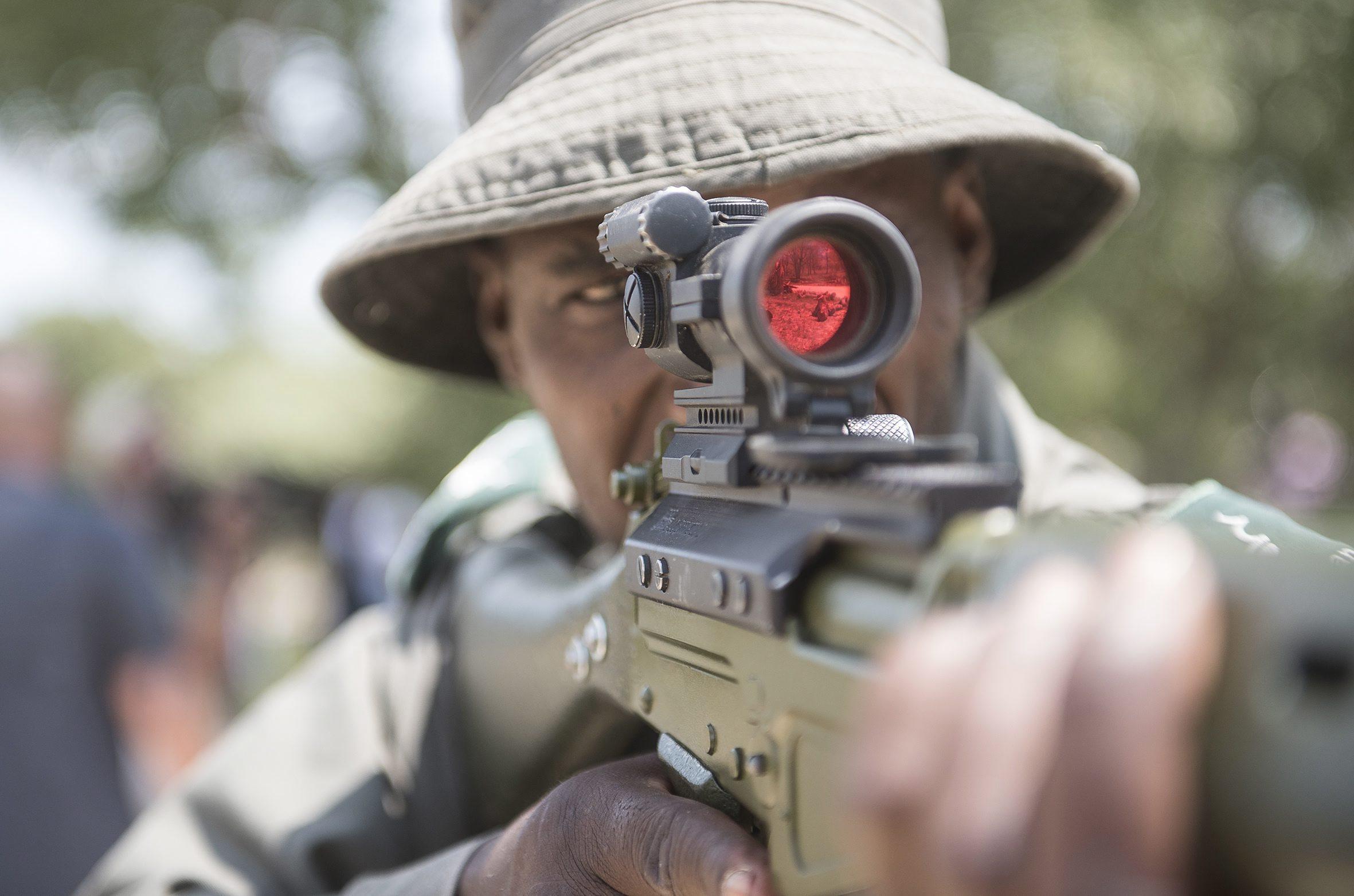 Aumento da caça furtiva de elefantes preocupa Parque Nacional Kruger