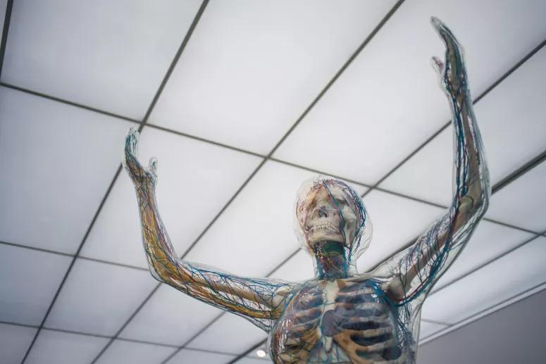 Quiz. Estas 11 perguntas sobre o corpo humano são básicas, mas apostamos em como erra pelo menos 2