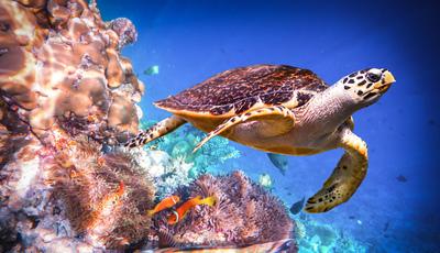 Os melhores sítios do mundo para ver tartarugas marinhas