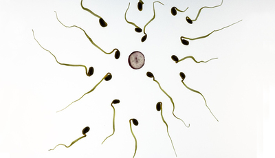 Teste de gravidez: a qual é que deve recorrer?