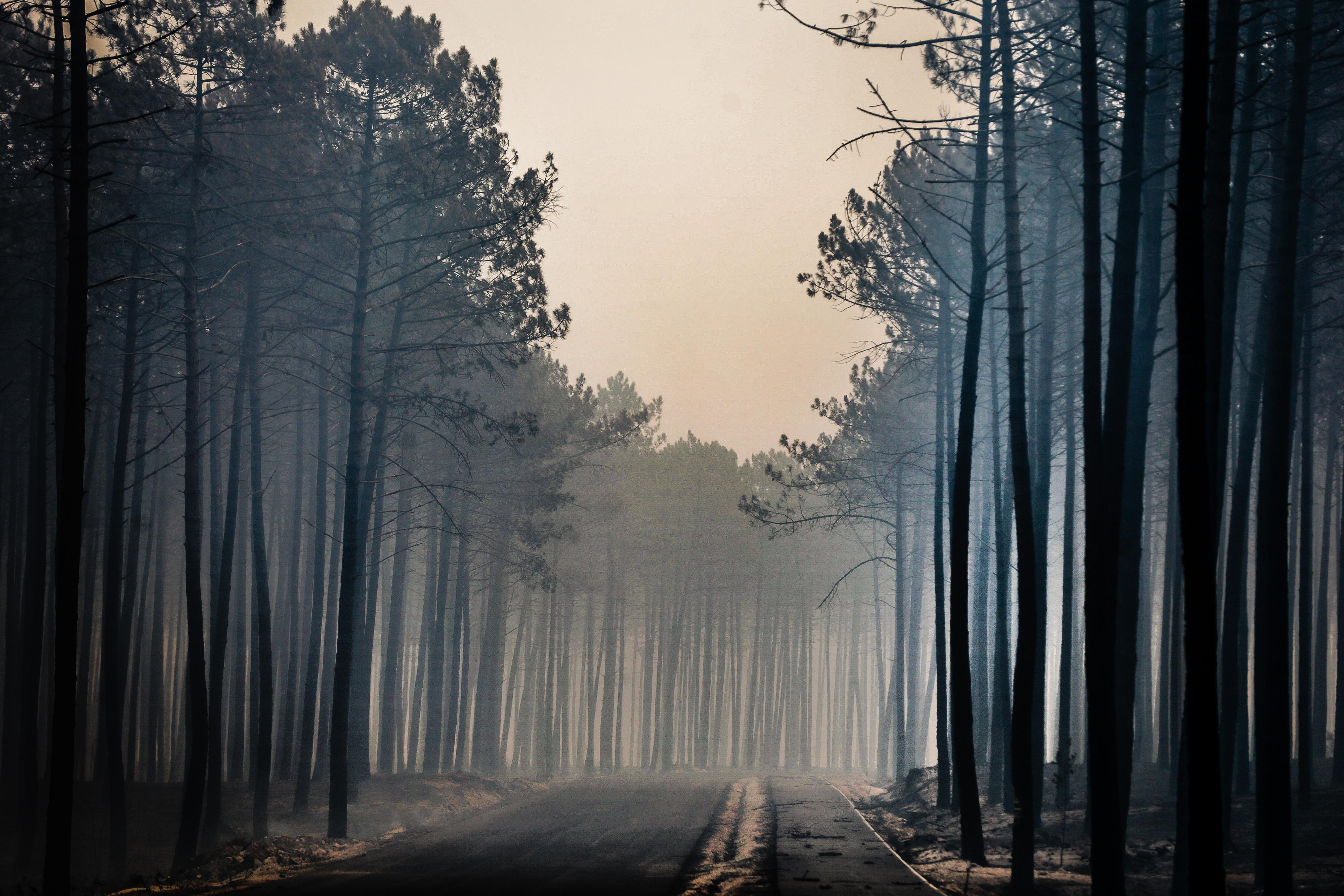 Incêndios: Parlamento aprova resoluções para reflorestação do pinhal de Leiria