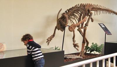Já alguma vez viram embriões de dinossauros? No Museu da Lourinhã é possível