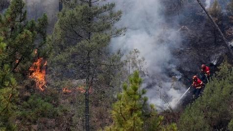 Reforma florestal em Portugal