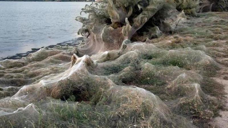 """Aranhas """"invadem"""" cidade na Grécia e criam teias com 300 metros"""