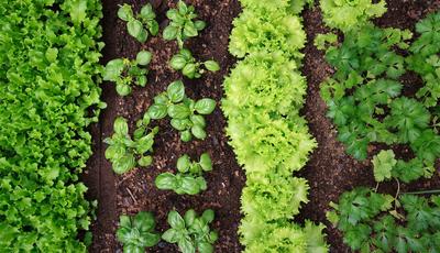 10 passos para criar a sua horta no jardim ou no quintal