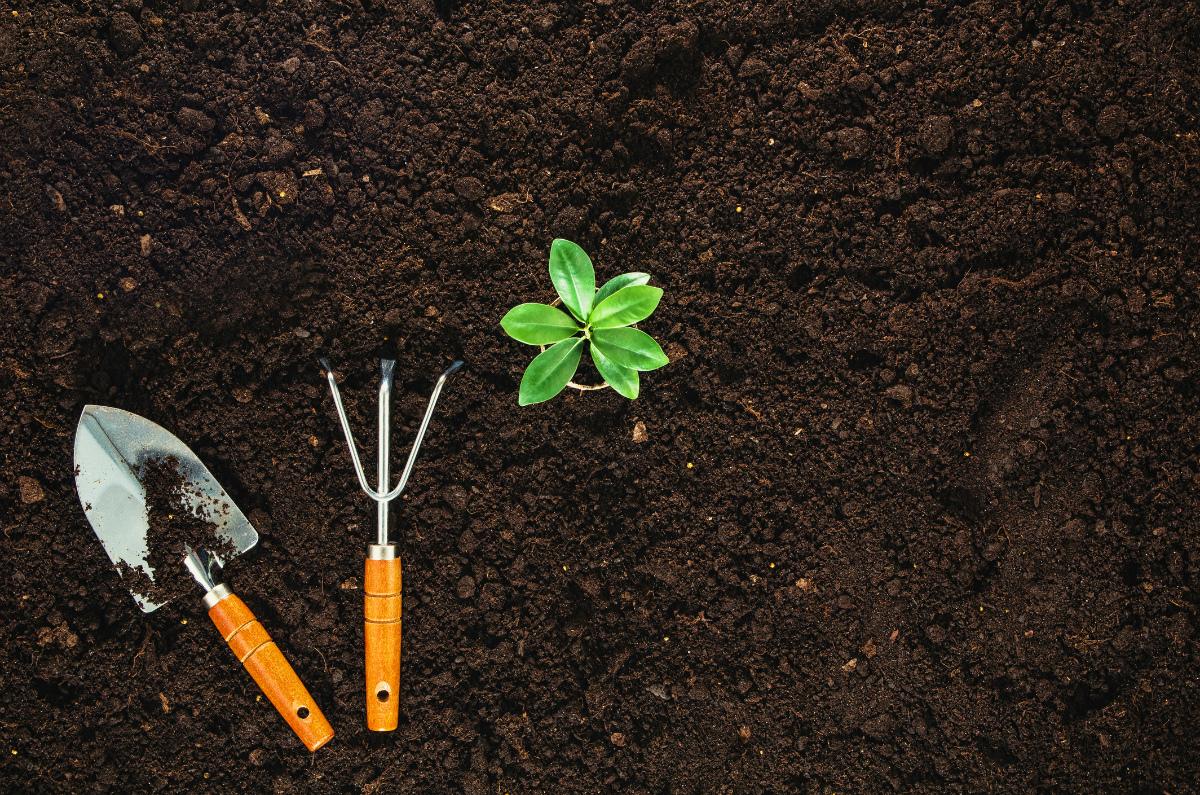 5 tendências de jardinagem a seguir em 2018