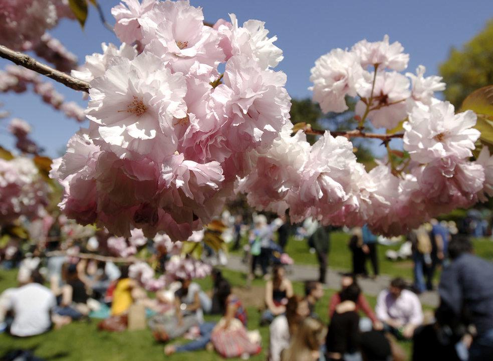 Voos de balão, trilhos e passeios de bicicleta, voos de balão para celebrar as cerejeiras em flor no Fundão