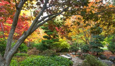 Os arbustos que mais refletem os tons do outono