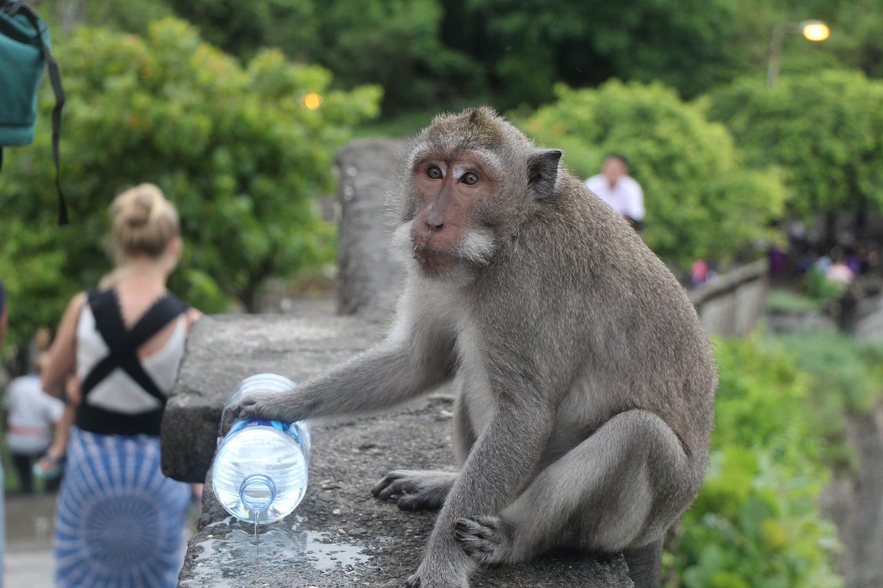 7 locais onde é preciso ter cuidado com os macacos