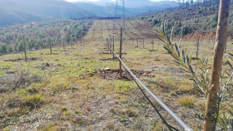 Negócios agrícolas em paisagem florestal: a estratégia do mosaico paisagístico