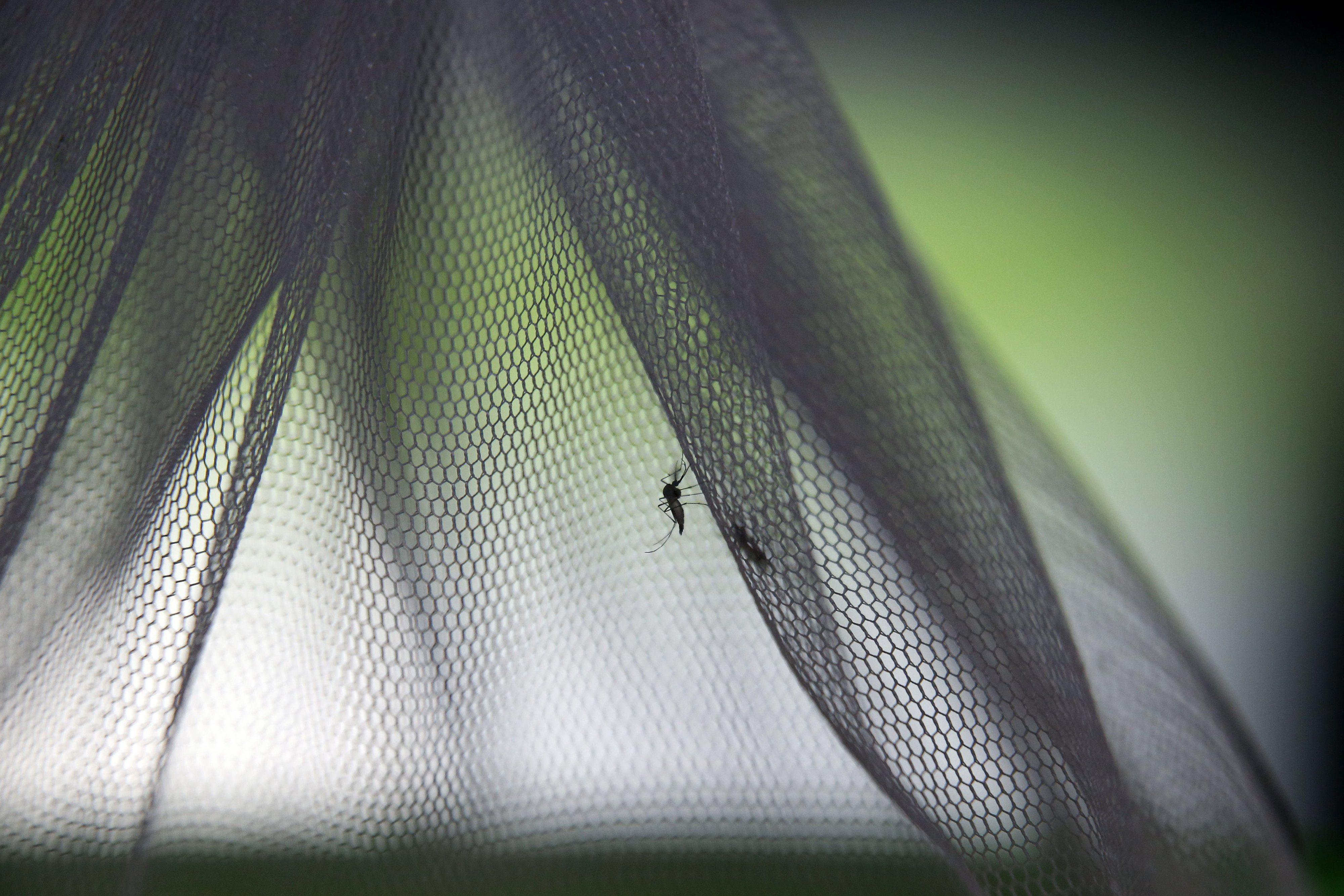 Mosquito transmissor do vírus da dengue detetado pela primeira vez em Portugal