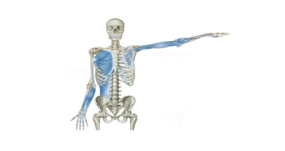 Epicondilite e ombro, qual a sua relação